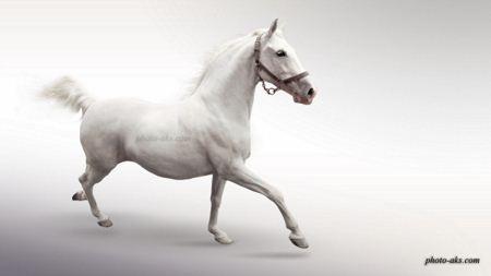 حکایت ( اسب سفید)